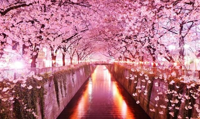 Сакура: летние каникулы