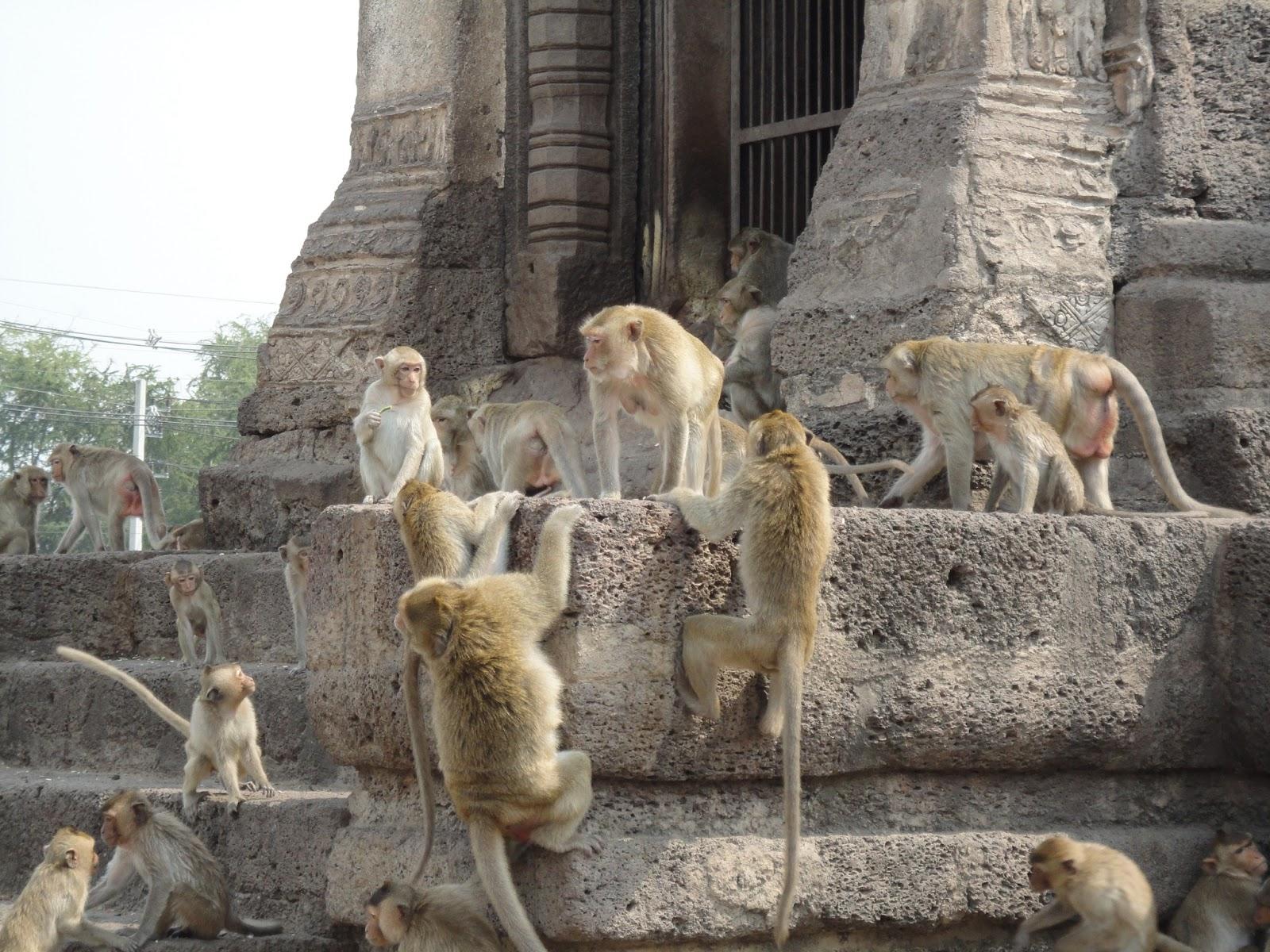 туристический маршрут по странам азии презентация